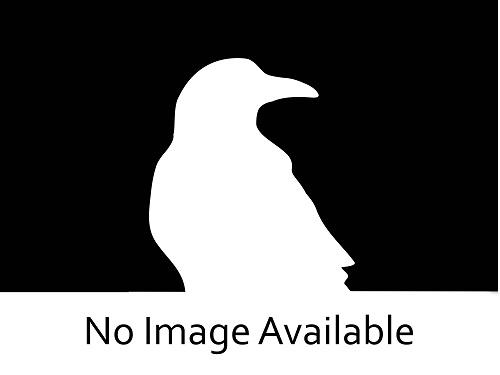 RAVEN-SIEMENS 6GK72431PX300XE0